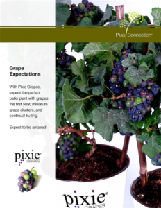 PixieGrapes_spotlight