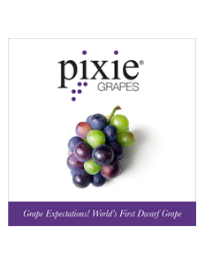 PixieGrapes_23x23Poster-232x300