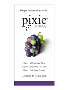 PixieGrapes_2x4Banner-232x300
