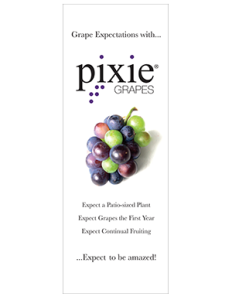 PixieGrapes_PullUpBanner
