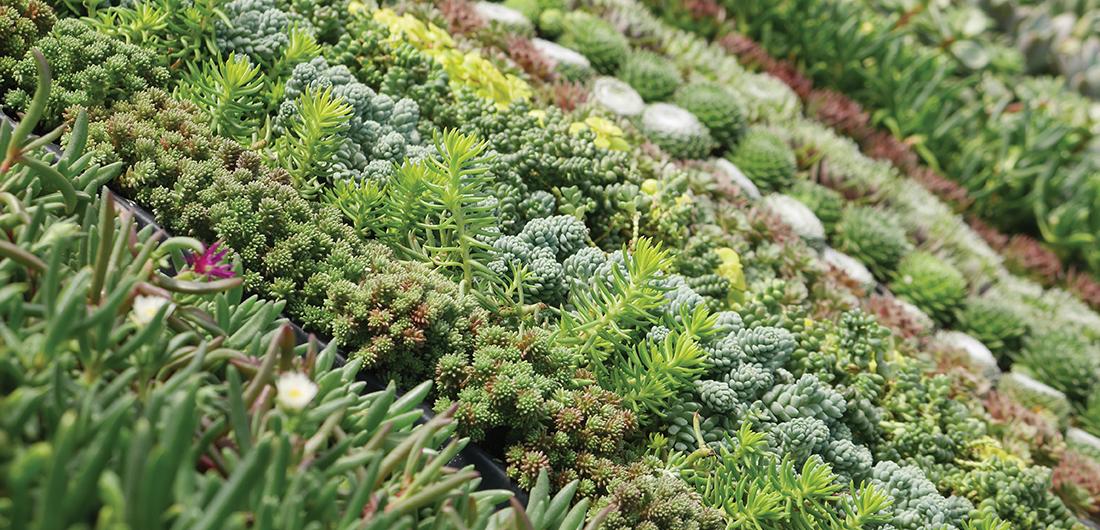 Succulent_spread